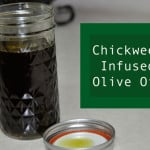 Chickweed Infused Olive Oil