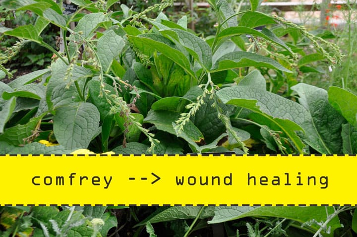 Comfrey for Wound Healing