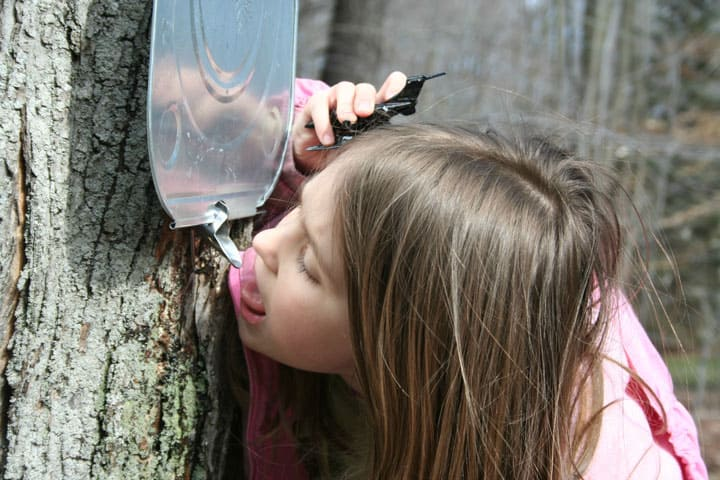 Tasting-Sap-with-Tap-My-Trees1