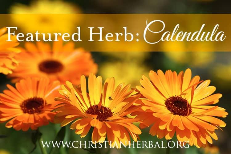 Featured Herb: Calendula