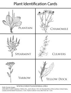 plant-identification-cards