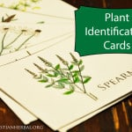 Plant Identification Cards
