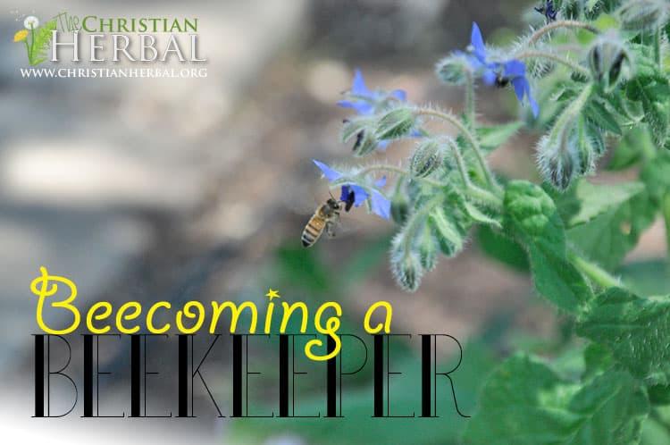 Beecoming a Beekeeper
