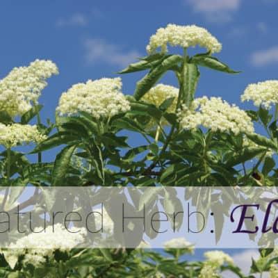 Featured Herb: Elder