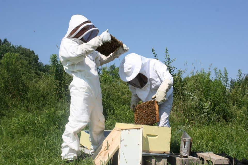 A hive inspection underway--the day's goal was to find the queen bee.