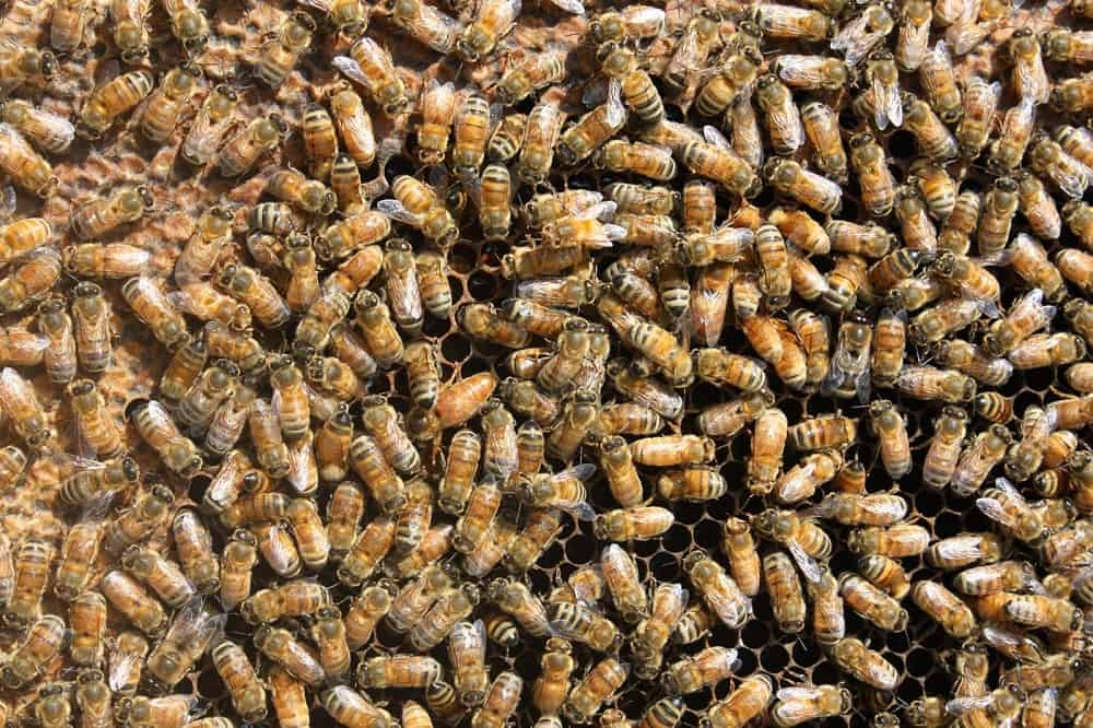 Mission accomplished...the queen has been found! Can you spot her?
