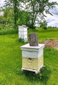 Matching the number of hives with the amount of time and energy you can spare is a learned art.