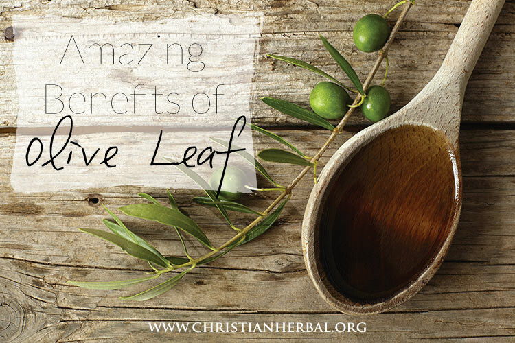 Amazing Benefits of Olive Leaf