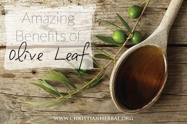 The Amazing Benefits of the Olive Leaf