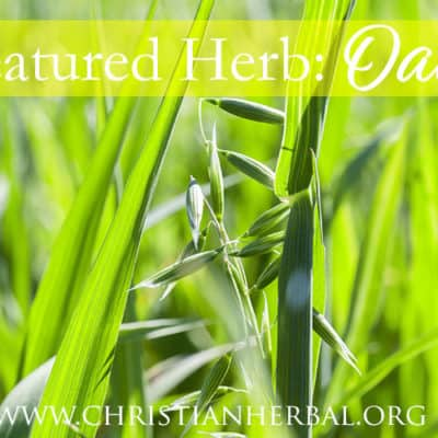 Featured Herb: Oats