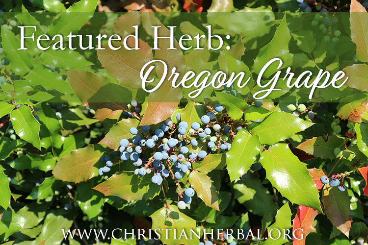 Featured Herb: Oregon Grape