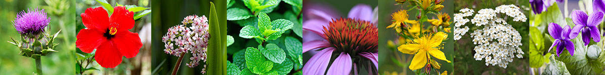 Herb Profiles